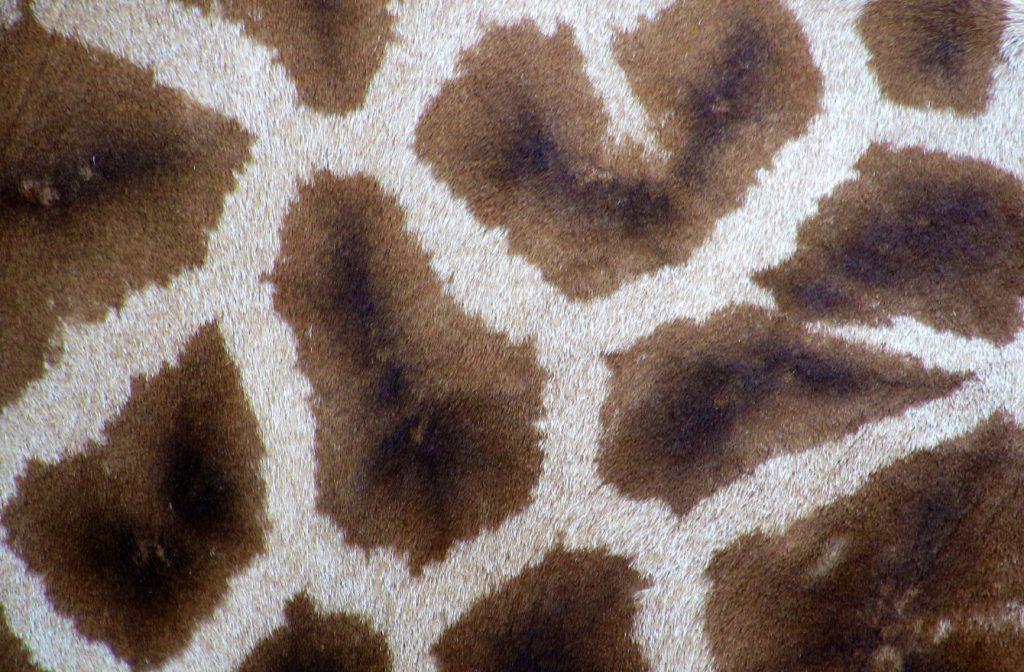 brązowy dywan w białe paski