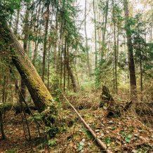 Jak wygląda proces wycinki drzewa z posesji?
